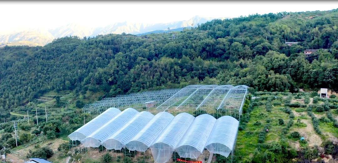"""杨梅搭""""顺丰""""无人机出山,开启科技助农新模式"""